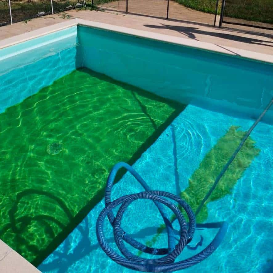 piscine verte que faire